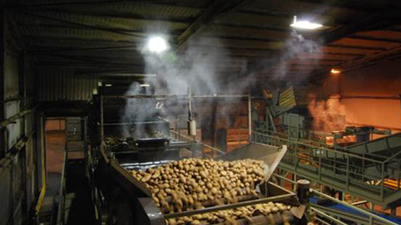 Fogging a Vegetable Packing Line